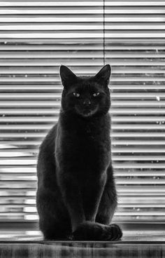 Black cats rule !!                                                                                                                                                      More