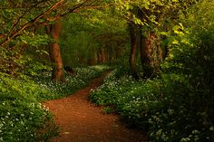 Wooded path in Lancashire, England