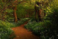 Forest Path, Ransom Woods, Lancashire, England  photo via hamsa