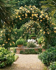 20 Ideas backyard garden pergola climbing roses for 2019 Cottage Rose, Garden Cottage, Formal Gardens, Outdoor Gardens, Amazing Gardens, Beautiful Gardens, Beautiful Gorgeous, Garden Arches, Garden Path