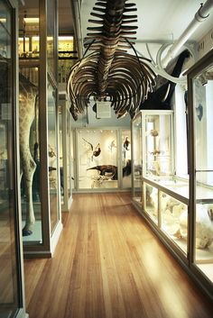 """Harvard Museum of Natural History  archaeology, and the study of the natural world will always be the first ways that bones enter our lives, via obsessions with dinosaurs, and visits to museums. Without ever experiencing them """"in the flesh"""" they are without the haunting connotations that the dead usually carry."""