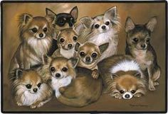 One more then what I use to have....    Fiddler's Elbow Chihuahuas Porch Doormat