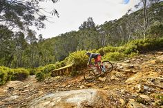 It's no secret that Victoria is home to some of Australia best mountain biking; thanks to its cluster of alpine resorts and a summer that outlasts the winter. Mount Baw Baw is Melbourne's closest mountain, and scattered atop a pristine alpine environment are a lesser-known network of mountain bike trails dipping in and out of grassy ski-fields and old access roads.
