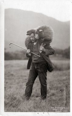 The hitchhiking guide for sheep, ca. 1905  (by EastMarple1)