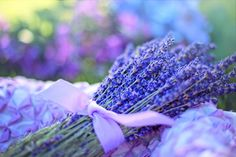 ClearLice contains lavender oil. Lavender can kill a variety of bacteria, fungi, & insects, including head lice.