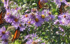A Healthy Garden is a Buggy Garden http://nativeplantwildlifegarden.com/a-healthy-garden-is-a-buggy-garden/