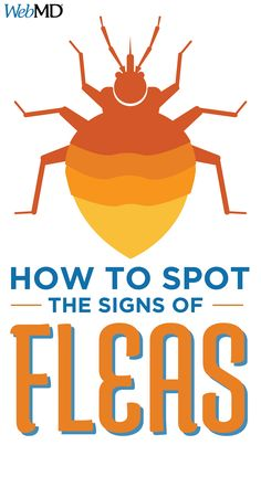 Every pet owner should be aware of the signs of a possible flea infestation. N Animals, Small Kittens, American Dog, Cat Fleas, Veterinary Medicine, Healthy Pets, Flea And Tick, Dog Bed, Your Pet