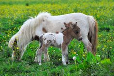 12 Precious Photos of Foals and Their Moms That Prove There's Nothing Like a Mother's Love - blessings.com