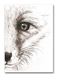 Pencil Drawings Of Animals, Animal Sketches, Cool Art Drawings, Ink Pen Drawings, Beautiful Drawings, Art Sketches, Fox Drawing, Painting & Drawing, Ink Pen Art