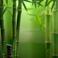 Zen Meditation. Will need grow light in basement