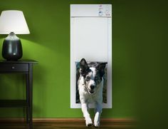 The power pet electronic pet door – a mart accessory for a smart pet