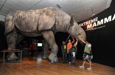 Extreme Mammals Austin Event Bullock Museum