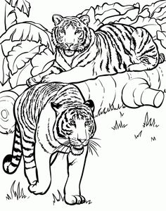 realistic and detailed coloring page of tiger for older kids - Coloring Pages Of Tigers