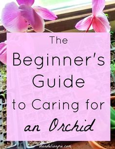 This has awesome tips!! A Beginner's Guide to Caring for an Orchid #orchid #plant #flowers #gardener #indoorplant #indoorplants #houseplants #easyhouseplants