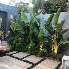 STYLE TIP - Tree Potting — Adam Robinson Design Tropical vibes 🌴🌱 . Install Let's Go Tree Potting Add a beautiful feature to your garden… Tropical Garden Design, Modern Garden Design, Backyard Garden Design, Tropical Landscaping, Tropical Decor, Palm Trees Landscaping, Tropical Patio, Tropical Plants, Backyard Plants
