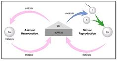 Difference between asexual and sexual reproduction offspring albums
