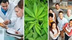 Cannabinoids increasingly recognized as powerful medicine for pain control, Alzheimer's prevention, stress relief and more