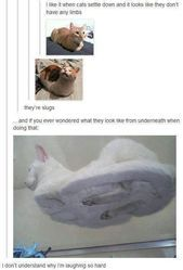 meme gato na mesa Funny Animal Jokes, Really Funny Memes, Funny Animal Pictures, Cute Funny Animals, Stupid Funny Memes, Funny Relatable Memes, Cute Baby Animals, Funny Cute, Cute Cats