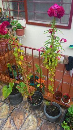 Flores casa da vovó