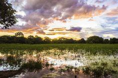 Pantanal (MT).