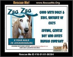 ― South Africa Dog Rescue ― ADOPTIONS ―RescueMe.Org Post Animal, Dogs And Kids, Boys Who, Rescue Dogs, South Africa, Adoption, Cats, Shop, Animals