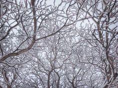 Neve (foto di Niccolò Vecchia)