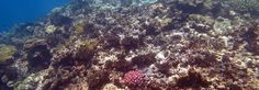 Scientists say coral bleaching on the Great Barrier Reef is now the worst die-off in recorded history.
