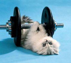 Günaydın  Sizde sabah sporunuzu yaptınızsa hadi işbaşı... Follow us on Instagram :D #cats #cat #catlover #lovecats #funny #fun #cute #socute #feline #felines #felinefriend #fur #furry #paw #paws #kitten #kitty #kittens #kittycat #kittylove #fluffy #fluff