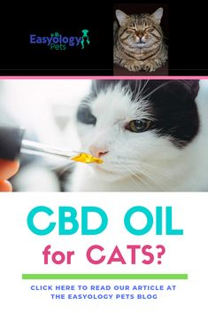 CBD Oil for Oil for Cats?Learn more about Cannabidiol, CBD oil that's used as a natural pain ma I Love Cats, Cute Cats, Funny Cats, Cats Humor, Funny Horses, Adorable Kittens, Cat In Heat, Cat Reading, Mama Cat