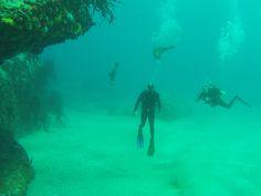 Cape Town, Seals, Diving, Colonial, Northern Lights, Fur, Nature, Travel, Naturaleza