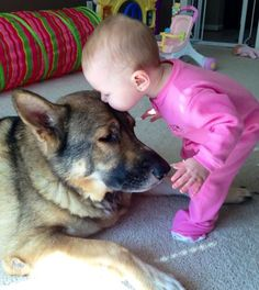Shepherds are gentle and totally family dogs.