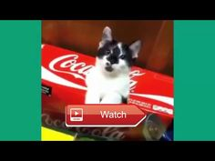 😸 Funny Cat Videos Lets Relax with Funny Cat Videos Best funny cats ever 😹 Cats are simply the hilarious and most funniest animalmake us…