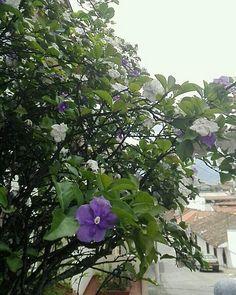 Una foto de @fabian_velasco_p en La Loma de Cartagena #Popayán