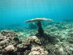 Un champignon sous-marin - Corail - Excursion D - El Nido - Ile de Palawan - Philippines Voyage Philippines, Les Philippines, Gopro Underwater, Underwater Photos, El Nido Palawan, Sites Touristiques, Beach Shack, Her World, Most Beautiful Beaches