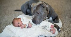 He Warned His Wife That Her Pitbull Would Hurt Their Baby But She Didn\'t Listen...