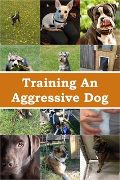 How To Train A Dog To Attack In Tamil And Pics Of Dog Training