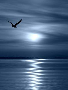 Beautiful Moon, Beautiful World, Beautiful Images, Foto Hdr, Belle Photo, Night Skies, Night Night, Beautiful Landscapes, Moonlight