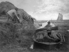 • Ricking the reed. Norfolk Broads. (1886) Photo:...