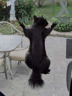 Fill the bird feeder please