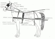 Carriage Driving Basics- the nitty gritty stuff Breyer Horses, Draft Horses, Driving Basics, Best Wagons, Coach Travel, Horse Drawn Wagon, Horse Harness, Riding Lessons, Horse World