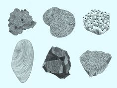 mineraux2.jpg, fév 2012