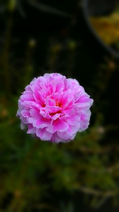What a beautiful flower!