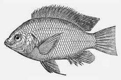 Proposal Pertanian: Proposal Permohonan Bantuan Ikan Nila