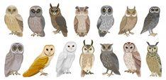 Cute Birds, Cute Owl, Owl Cartoon, Cute Cartoon, Funny Owls, Owl Templates, Owl Illustration, Bird Poster, Halloween Labels