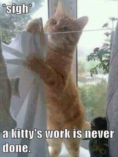 Funny animals, a cats work is never done