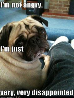 "funny pug pictures | Funny Pug Pictures: ""I'm not angry. I'm just very very ..."