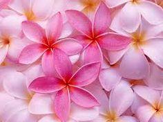 flores exoticas de colombia - Buscar con Google