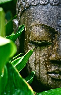 . Art Buddha, Buddha Buddhism, Image Zen, Bali, Little Buddha, Art Asiatique, Ganesha, Belle Photo, Feng Shui