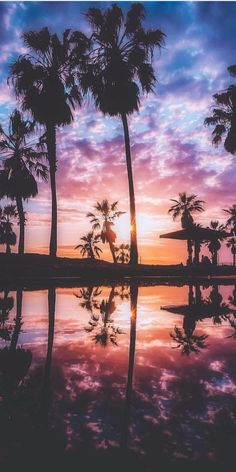 Incredible Venice Beach Sunset by Tumblr Wallpaper, Wallpaper Backgrounds, Tree Wallpaper, Beautiful Sunset, Beautiful World, Venice Beach California, Belle Photo, Pretty Pictures, Beautiful Landscapes