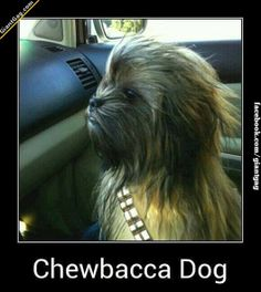 Chewbacca Dog | Click the link to view full image and description : )
